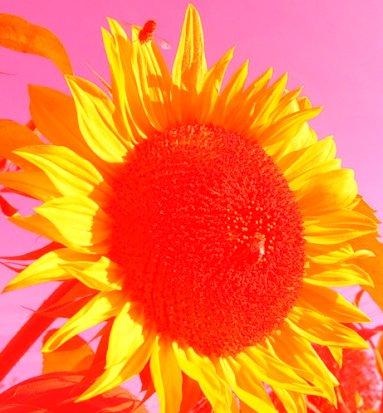 Применение режима Lighten (Осветление) Corel PaintShop Pro X4 автор Шитов Виктор Николаевич
