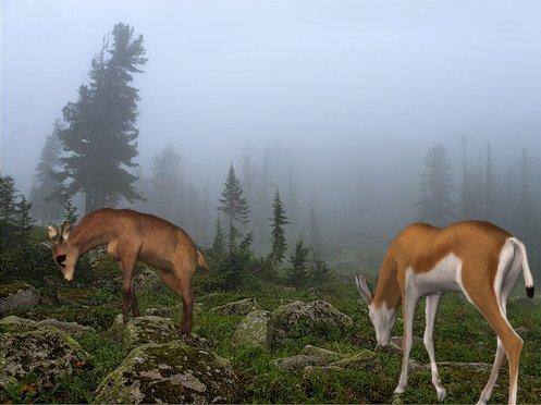 Изображение с вставленными готовыми рисунками Corel PaintShop Pro X4 автор Шитов В.Н.