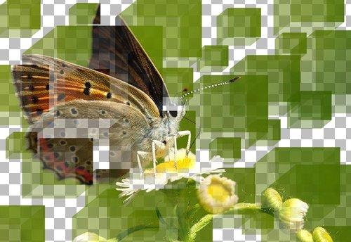 Готовое изображение Corel PaintShop Pro X4 автор Шитов В.Н.