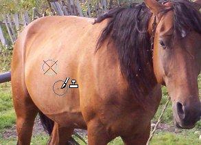 Иконки вставки и копирования образцов изображения Corel PaintShop Pro X4 автор Шитов В.Н.